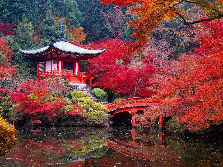 autumn leaves garden of saiho-ji in kyoto japan