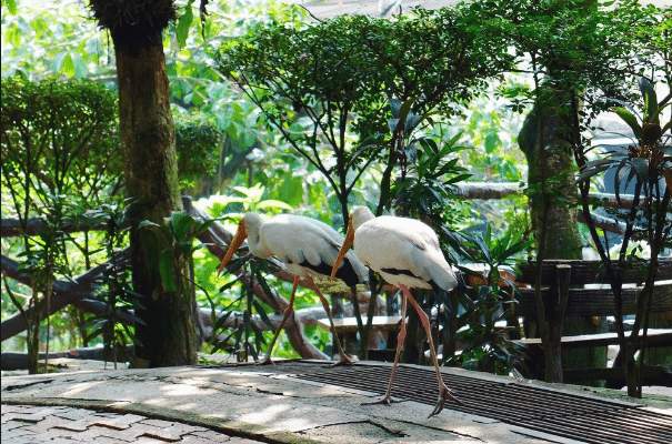 Nature and wildlife holiday experience and halal things to do in kuala lumpur Malaysia