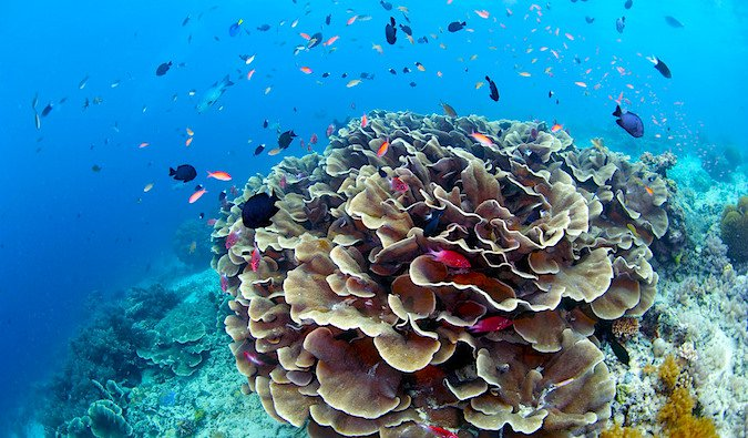 Top coral sites in Sipadan Sabah