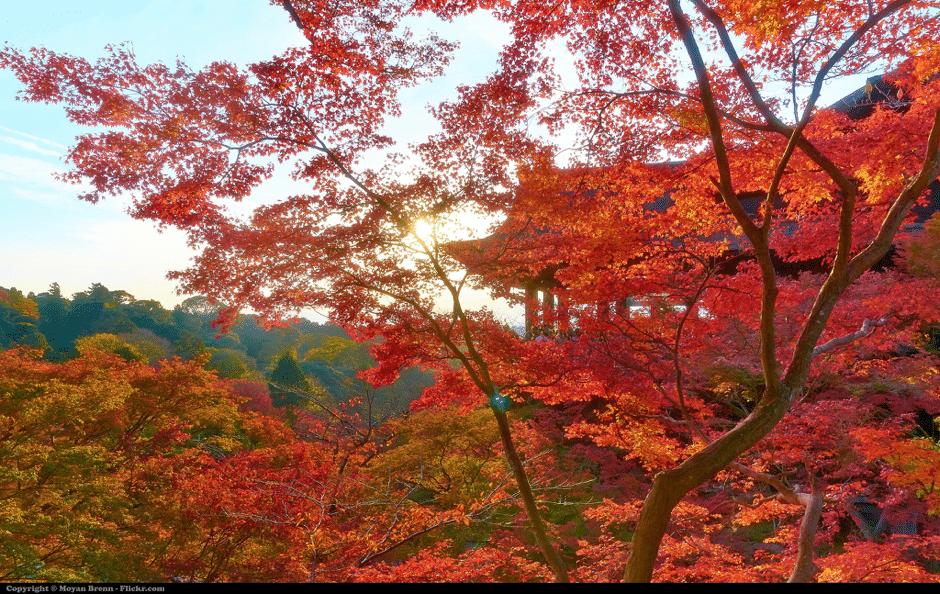 Travel destinations for Muslim photographers - Kyoto Japan