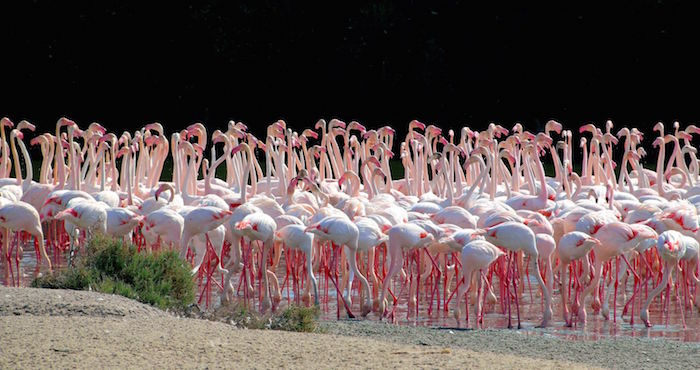Free things to do in Dubai - Wetland reserve pink flamingo